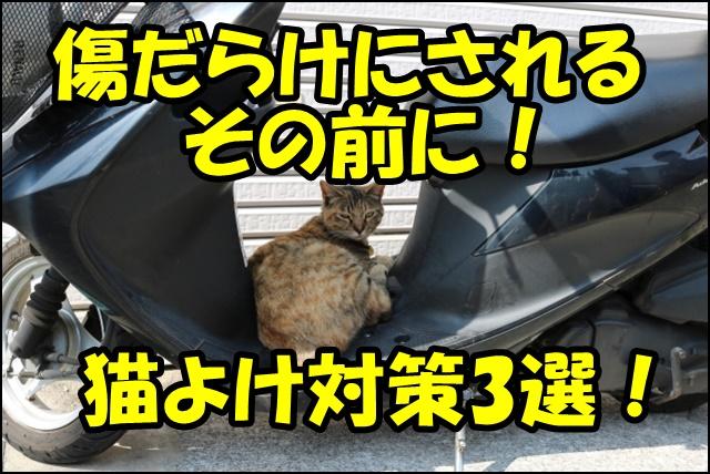 バイクの猫よけ対策!シートやカバーの上に乗ってしまうのを防ぐ方法3選!